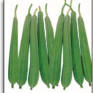 Ridge Gourd Seeds / Beerakaya Seeds