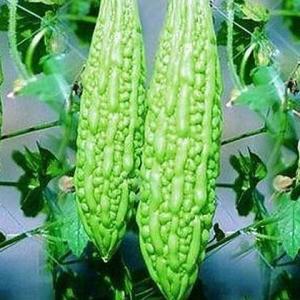Kakarakaya Seeds Bitter Gourd Seeds
