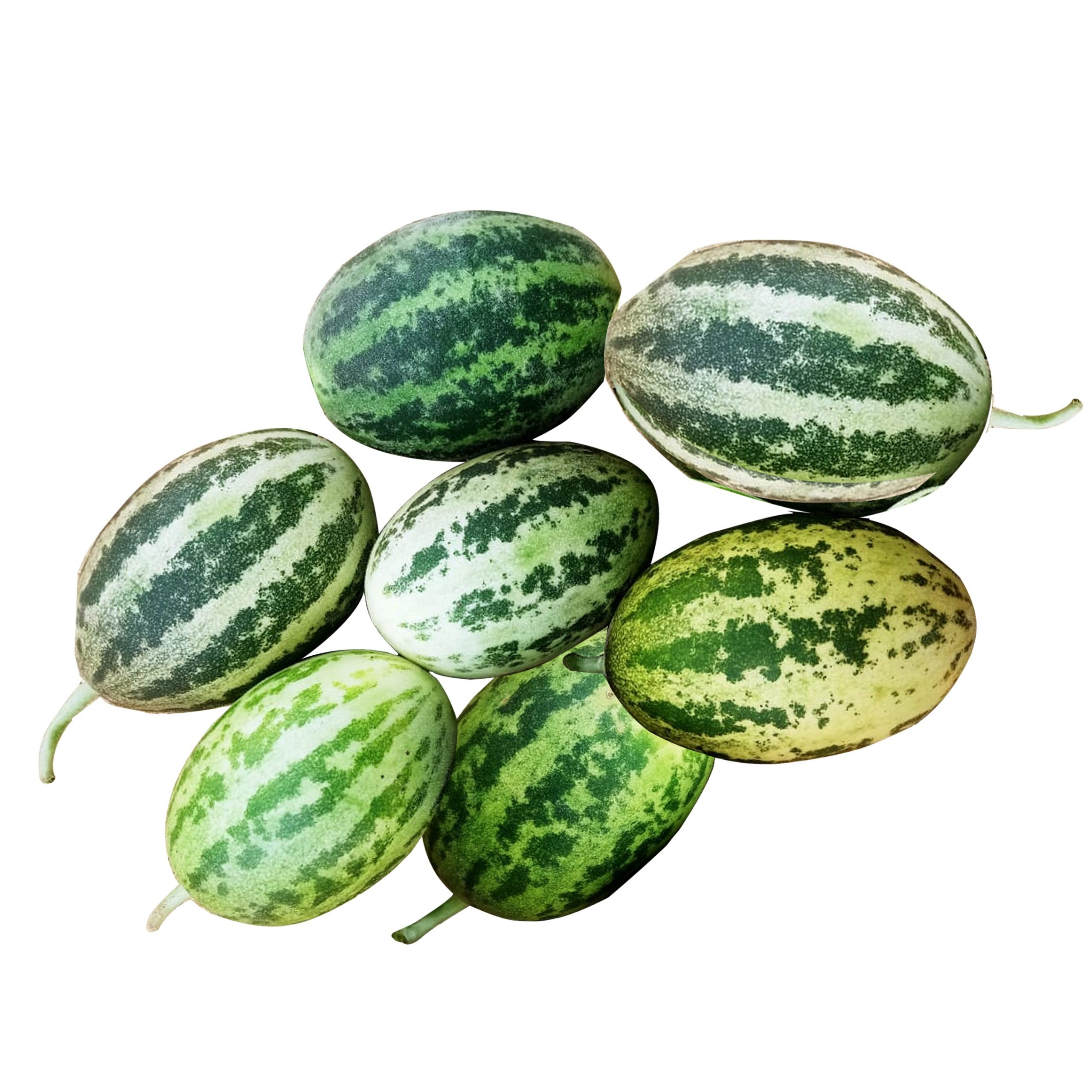 Budamkaya Seeds / Lemon Cucumber Seeds