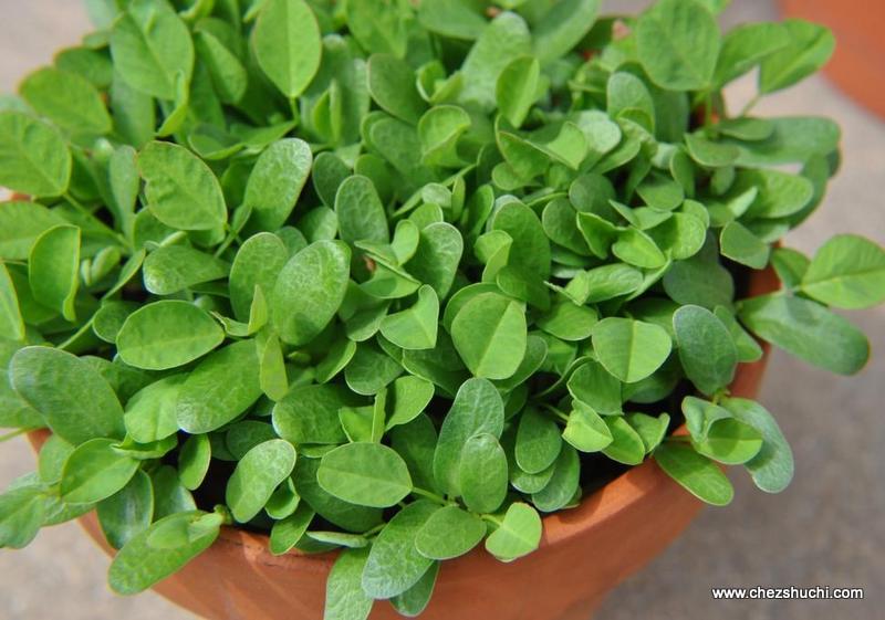 Fenugreek Seeds / Methi Seeds