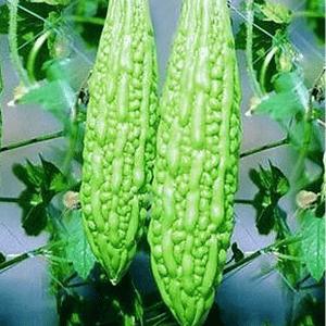 Kakarakaya / Bitter Gourd Seeds