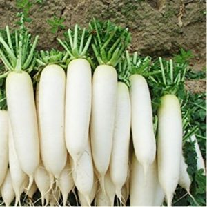 Radish / Mullangi Seeds