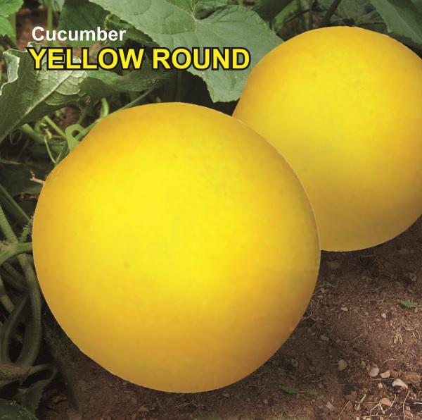 Dosakaya / Yellow Round Cucumber Seeds