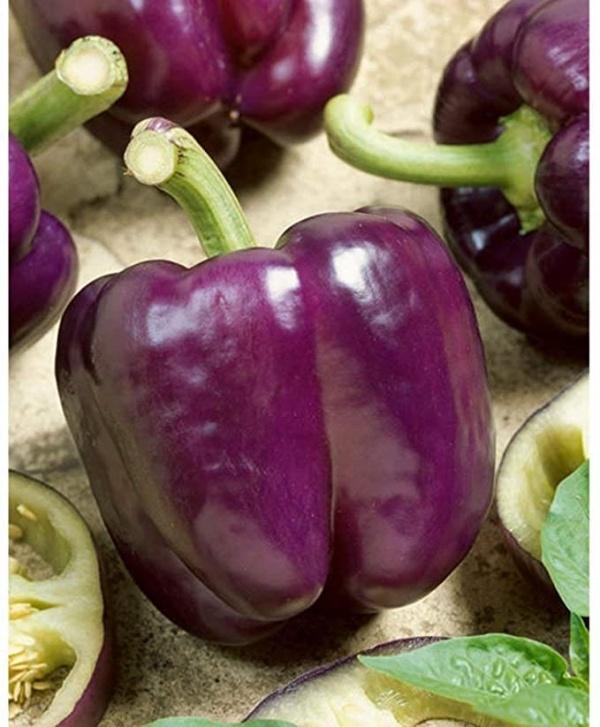 Capsicum Purple Bell Seeds