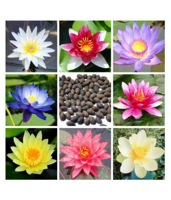 Lotus Mix Flower Seeds