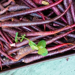 Carrot Black Wonder Seeds