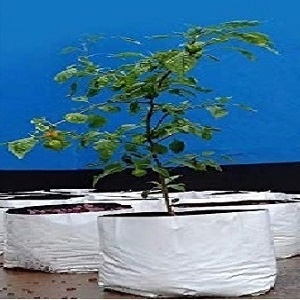 LDPE Grow Bags 50x28x28 Cms (Pack of 5)