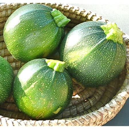 Squash Globe Round Green Seeds