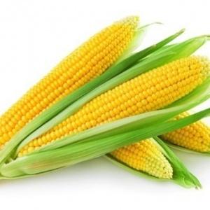 Sweet Corn Honey Sweet Seeds